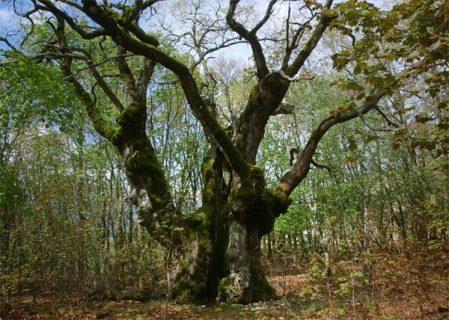 Photo du documentaire le temps des forêts
