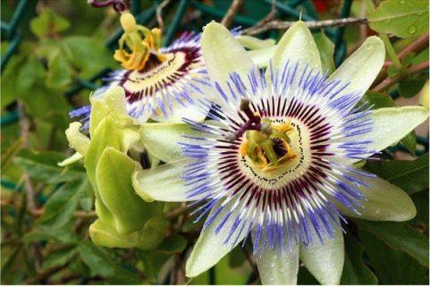 Photographie d'une fleur dans la nature