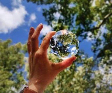 Photographie d'un arbre avec une bulle devant
